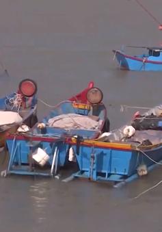 Khuyến cáo ngư dân không ra khơi khi biển động