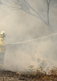 Sydney, Australia đối mặt với tình trạng khẩn cấp y tế do khói mù