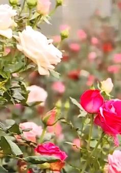 Trải nghiệm không gian công viên hoa Đà Lạt