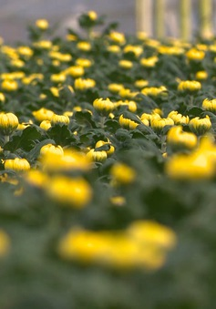 Nhiều trắc trở khi tạo giống hoa mới