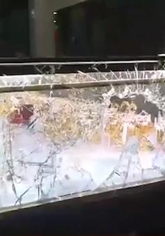 Quảng Ngãi: Bị cướp tiệm vàng khi xem bóng đá