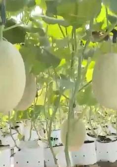 Thừa Thiên - Huế: Hiệu quả từ mô hình sản xuất nông nghiệp đô thị