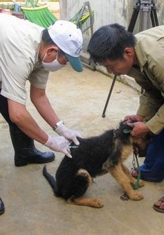 Đắk Lắk: Thêm 1 trường hợp tử vong do bệnh dại