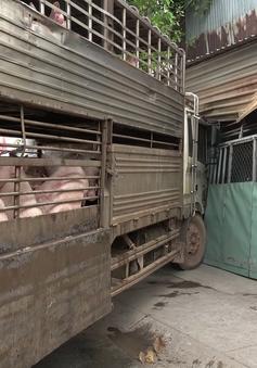 Xe tải chở 50 con heo lao vào nhà dân trên Quốc lộ 13