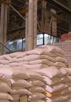 Giá lúa gạo tăng nhẹ