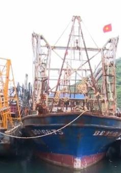 Gỡ vướng mắc mua bảo hiểm tàu cá theo Nghị định 67