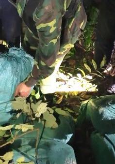 Phá chuyên án gần 280kg ma túy đá tại Hà Tĩnh