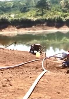 Nhiều diện tích cây trồng tại Lâm Đồng bị khô hạn