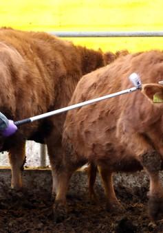 Hàn Quốc hủy lệnh cấm vận chuyển gia súc