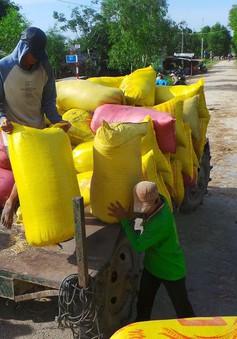 Gỡ nút thắt tín dụng cho ngành lúa gạo