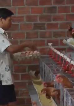 Phỏng vấn: Tình hình dịch cúm gia cầm H5N1 tại Quảng Nam và khuyến cáo tiêu dùng