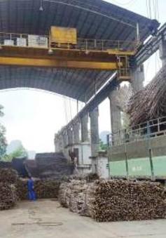 Thiếu nguyên liệu, nhà máy đường kết thúc sớm vụ ép