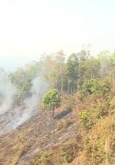45.000 ha rừng tại Cà Mau có nguy cơ cháy cao