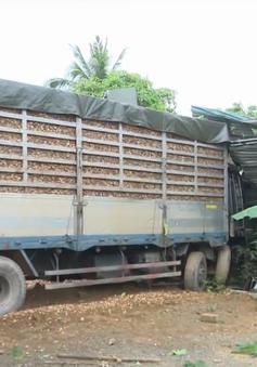 Quảng Trị: Xe container chở gỗ dăm mất lái lao vào nhà dân bên đường