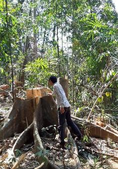 Khởi tố vụ phá rừng phòng hộ sông Tranh