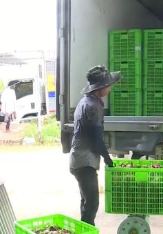 15% hợp tác xã nông nghiệp ứng dụng công nghệ cao