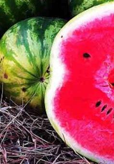 Những thực phẩm giúp đánh bay cái nóng mùa hè