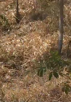 Căng thẳng chống cháy rừng tại ĐBSCL