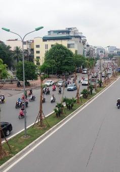 Hà Nội thay thế hàng trăm cây phượng mục ruỗng