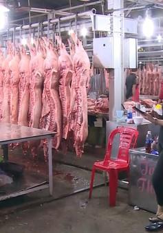 TP Hồ Chí Minh: Lo ngại dịch tả lợn châu Phi thâm nhập từ miền Tây