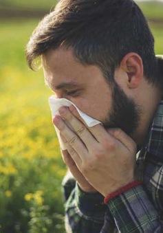 Australia phát hiện cách dự đoán bệnh dị ứng phấn hoa và hen suyễn