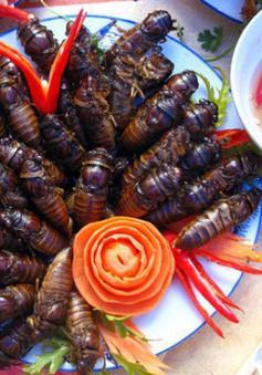 Cẩn trọng khi dùng côn trùng làm thức ăn