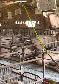 Đăk Lăk triển khai nhiều phương án phòng chống dịch tả lợn châu Phi