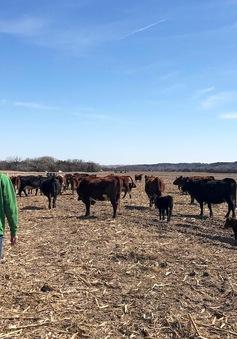 Mỹ chi 16 tỷ USD hỗ trợ nông dân bị ảnh hưởng bởi chiến tranh thương mại