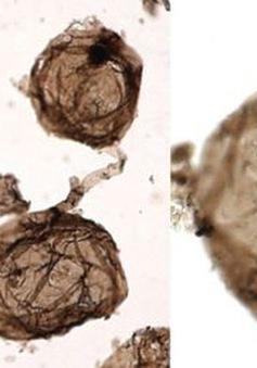 Phát hiện những hóa thạch lâu đời nhất của sự sống đa bào trên đất liền