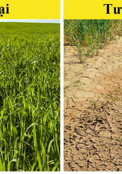 """10 loại thực phẩm có nguy cơ """"tuyệt chủng"""" vì biến đổi khí hậu"""