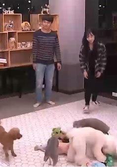 Trường mầm non dành cho… những chú cún