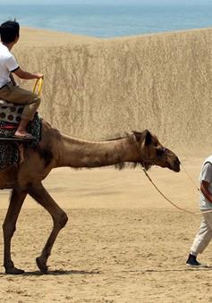 Nhật Bản kêu gọi du khách ngừng vẽ lên cồn cát nổi tiếng