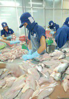 Đẩy mạnh tìm kiếm và mở rộng thị trường xuất khẩu cá tra Việt