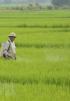 Thái Bình: Tạm hoãn các cuộc họp để cứu lúa