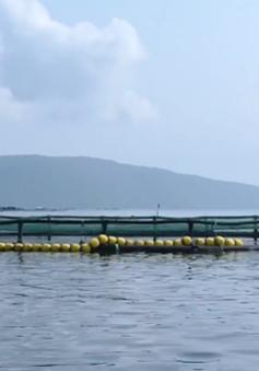 Phát triển nuôi biển tạo sinh kế mới cho ngư dân
