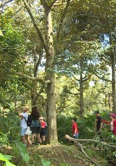 Làng văn hóa – nét mới trong cách làm du lịch sinh thái