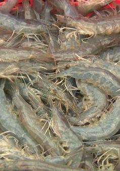 Trà Vinh: Giá tôm giảm từ 10.000 - 15.000 đồng/kg
