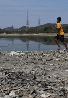 Điểm du lịch nổi tiếng của Ấn Độ đang đối diện với tình trạng thiếu nước trầm trọng