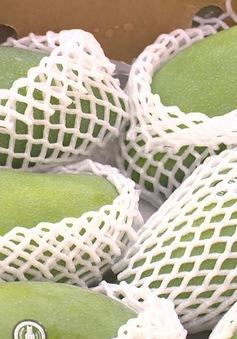 Mộc Châu đặt mục tiêu xuất khẩu từ 400 - 500 tấn xoài sang Trung Quốc