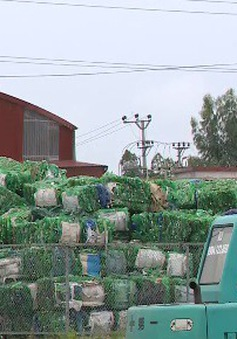 Bất an vì cơ sở tái chế nhựa giữa khu dân cư
