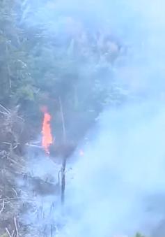 Quảng Trị: Nguy cơ cháy rừng cao do nắng nóng quay trở lại