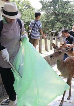 Nai Nara chết do nuốt quá nhiều túi nhựa