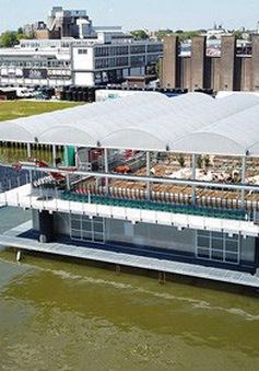 Hà Lan nuôi bò sữa trên biển