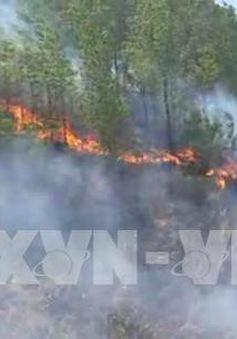 Khởi tố thêm 3 đối tượng liên quan đến vụ cháy rừng Hương Sơn