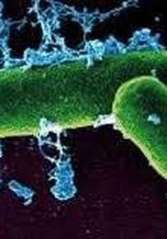 Bolivia xác nhận hai trường hợp tử vong do sốt phát ban đen