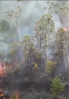 Hơn 100 người tham gia chữa cháy rừng ở Đà Nẵng