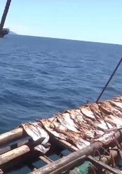 Ngư dân lao đao vì tồn đọng hàng nghìn tấn mực khô