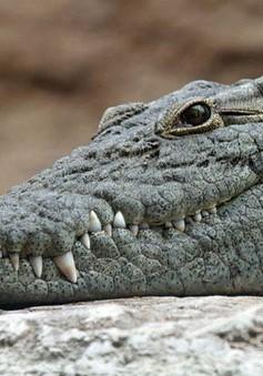 Tổ tiên của cá sấu từng thích... ăn chay