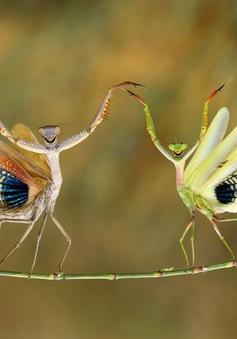 Những bức ảnh tuyệt đẹp của mẹ thiên nhiên trong cuộc thi ảnh Glanzlichter