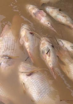 Khắc phục lượng cá chết do thủy điện Đồng Nai xả lũ